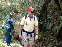 Walking in forest on Kili's lower slopes