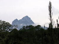 Mawenzi peak seen through the forest